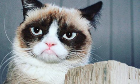 Grumpy Cat History